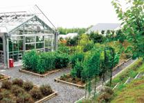 薬用植物園(オリーブ館)1