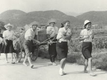 薯の収穫 松ヶ崎農場から学校まで大八車で運ぶ(1943年)