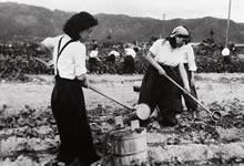松ヶ崎農園 (1944年7月11日)